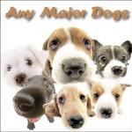 Any Major Dogs